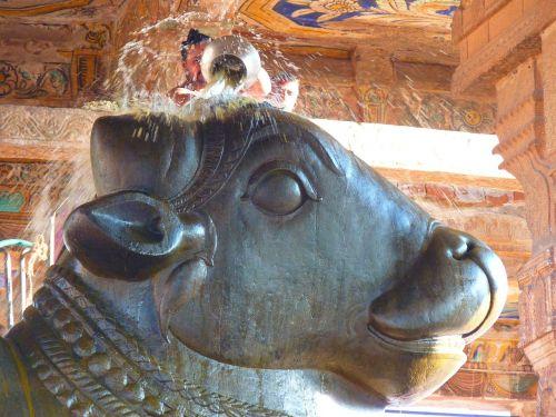 šventykla,buliaus šventykla,nandi,ceremonija,brihadeswhwara šventykla,religija,šventas,tanjore,Indija