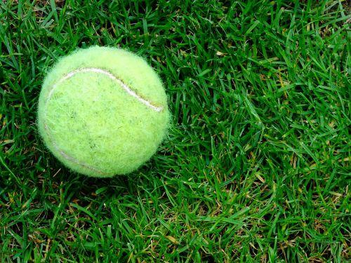 teniso kamuoliukas,žolė,lauke,sodas,žaisti