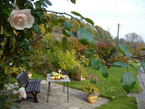 terasa,bankas,jaukus,ruduo,rožės,gamta,stalas,padengtas,katė
