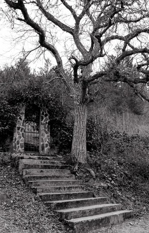 teroras,medis,laiptai,durys,baimė,siaubingas,gamta