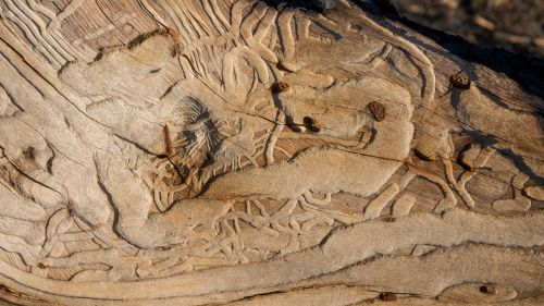 tekstūra,fonas,mediena,žievė,medis,sluoksnis,dizainas,grungy,amžius,eksponuotos