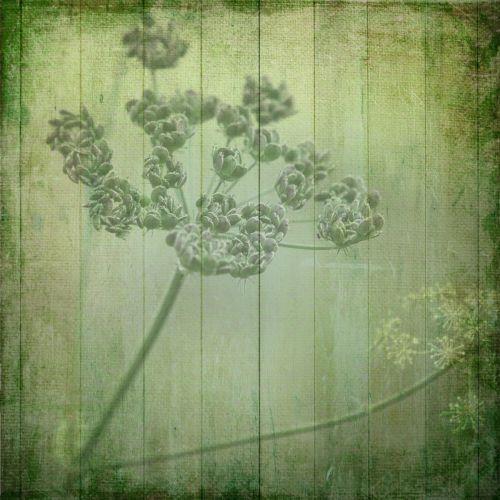 tekstūra,fonas,gėlės,gėlė,mediena,mediniai skydai,augalas,gamta,spalvinga,dekoratyvinis,popierius,Raštinės reikmenys,romantiškas,dekoruoti,pastellfarben,žalias,pilka mėlyna,švelnus,gerai,vasara
