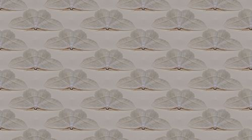 tekstūra,drugelis,drugys,balta,vabzdys,siena,Scrapbooking