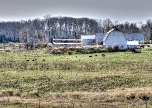 ūkis, ūkininkavimas, nauja & nbsp, Anglija, kraštovaizdis, tapybos, kaimas, Ūkis