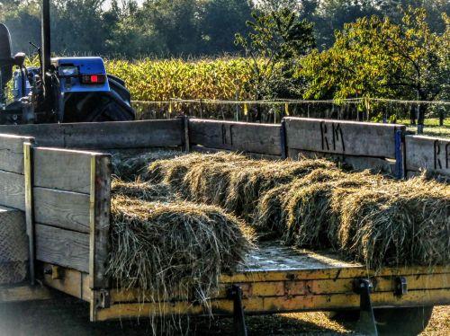 šienas & nbsp, važiuoti, traktorius, ūkis, šienas, sunkvežimis, šieno važiavimas