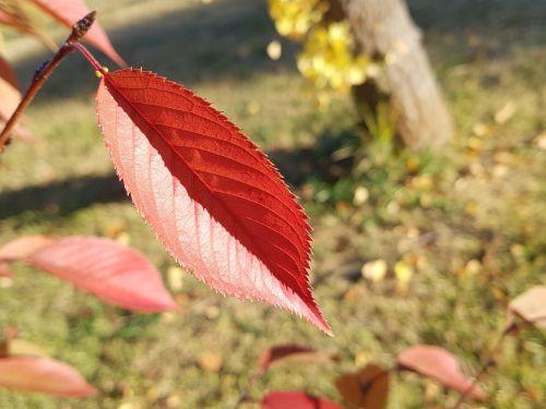 lapai,ruduo,rudens lapai,lapai,gamta,mediena,lapai,parkas,kraštovaizdis
