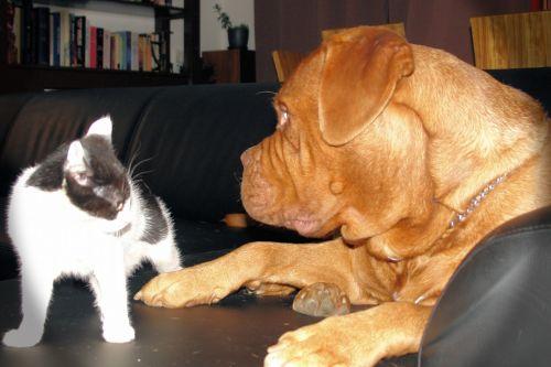 katė, šuo, atrodo, Draugystė, augintiniai, Žvilgsnis