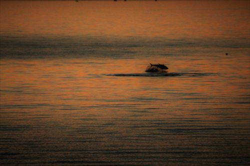 jūra, vandenynas, tunų, saulėlydis, kroatija, adrijos regionas, taip, primosten, Spalio mėn, indian & nbsp, vasara, kanonas, teigiamas, akimirka taip