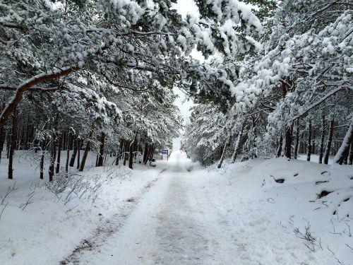 kelias,žiema,sniegas,gamta,klajojantis,takas,medis