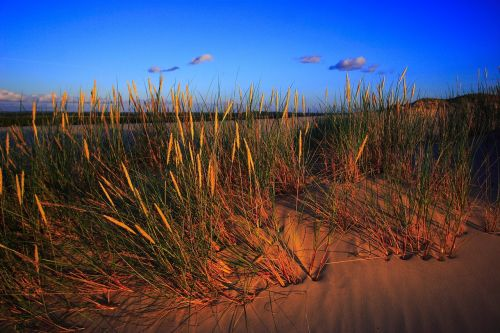 smėlio kopos, kopos, slowinski nacionalinis parkas, Pomeranijos skiltis, czołpino, czołpin, dune czołpińska, flora, gamta, kraštovaizdis, Lenkija, saulėlydis, smėlis, kopos augalai, Krantas, mobili kopija, Baltijos jūros pakrantė, Baltijos jūra, augmenija, užpildymas, judančios kopos