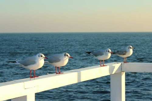 kačiukai,prieplauka,jūra,Baltijos jūra,gamta,vanduo,Lenkija,Krantas,peizažai,Gdanskas,vaizdas į jūrą,saulė,oras
