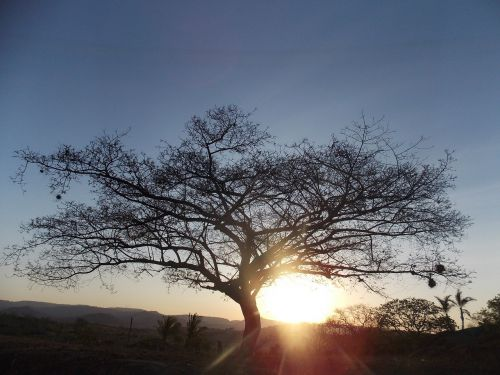 gyvybės medis,skraidantis,gamta,gyvenimas,medžiai,kraštovaizdis,bagažinė,šakelės,ruduo,taika,sodas,kalnas,širdis,miškas,lapai,žalias