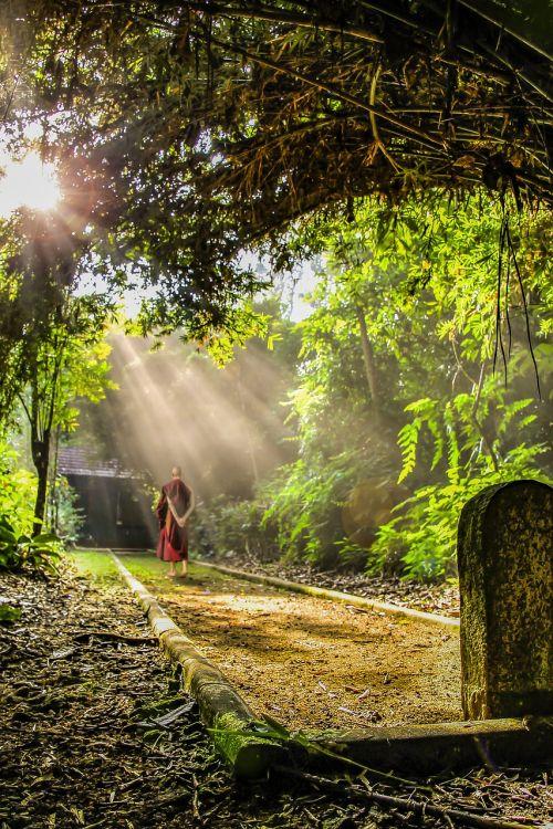 teravada budizmo,vaikščioti meditacija,vienuolis,budizmas,budistinis,kultūra,meditacija,religinis,religija,šventykla,dvasingumas,Theravada,vaikščiojimo takas,tradicinis,vienuolynas,saulės spinduliai,rūkas