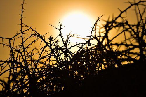 erškėčių,augalas,gamta,aštrus,aštrus,smailas,saulėlydis,saulė,šešėliai