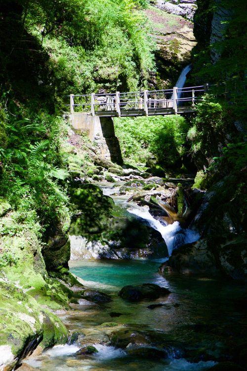 Thurbach,Bachas,Gorge,tobel,tiltas