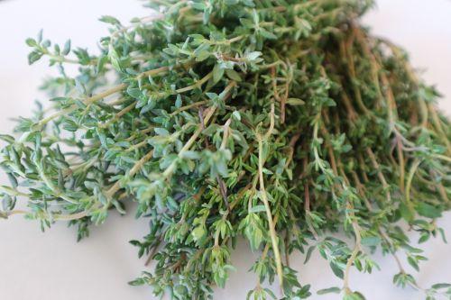 čiobreliai,vaistinis augalas,virėjas,prieskoniai,gamta,vaistažolių augalas,vaistinis augalas,žalias,vaistiniai augalai,žolelės