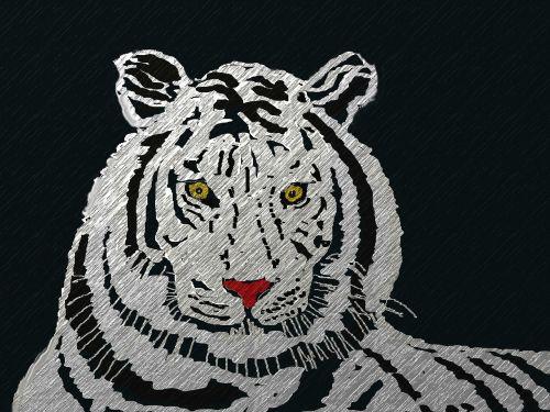 tigras,katė,gyvūnas,mėsėdžiai,Wildcat,zoologijos sodas,pavojingas,serengeti,safari,gamta,plėšrūnas