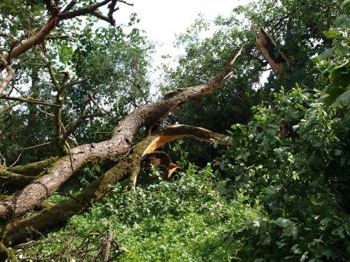 tornado sugadinimas,medis,Gamtos jėga