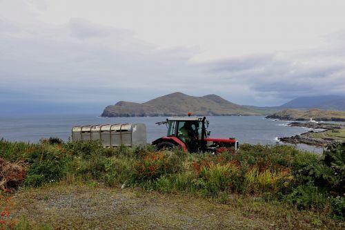 traktorius,ūkininkas,Žemdirbystė,laukas,Bauer,žemės ūkio mašina,landtechnik,auginimas,ariamasis,žemės ūkio,sala,komanda,gamta,derlius,vasara,žemės ūkio traktorius,kombainas,derliaus metas,transporto priemonė,mašina