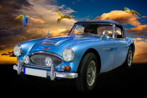 eismas,automatinis,oldtimer,austin,austin healey,kabrioletas,Sportinė mašina,prožektorius,grotelės,papūga,komponavimas,mėlynas,pkw,vairuoti automobilį