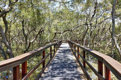 takas,medinis,kelias,dykuma,vaizdingas,vaikščioti,takas,pėsčiųjų takas,trasa,natūralus,aplinka