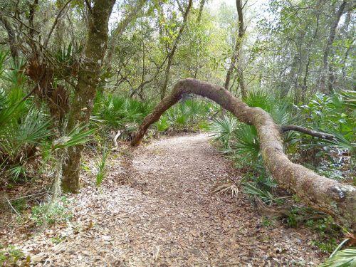 takas,žygiai,medis,gamta,miškas,parkas,nuotykis,kelias,vaikščioti,lauke,dykuma,kelionė,kritimas,pėsčiųjų takas,kuprinė,kelionė,poilsis,veikla,gyvenimo būdas,kelionė,keliautojas,tyrėjas,kelionė,kelionė,tyrinėti,kryptis,gidas