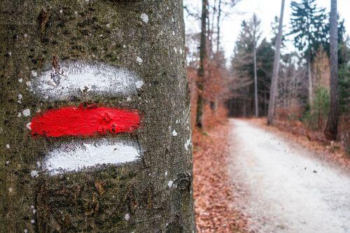 takas,medis,ruduo,ruda,migracijos pobūdis,toli,žurnalas