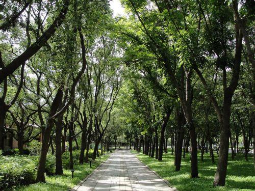 takas,medis,Taivanas,kelias
