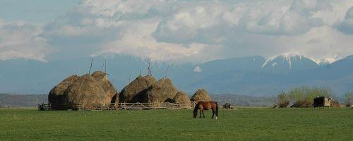 transilvanija,kalnai,arklys,kraštovaizdis,gyvūnas,gamta,žolė,žalias,mėlynas,lauke,laukas,vasara,scena,kaimas
