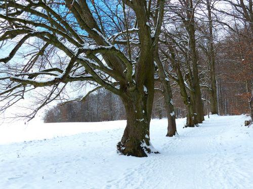 medis,alėja,sniegas,snieguotas,žiema,šaltas,laukas,toli,gentis,filialas,miškas,gamta,miško takas,miško pakraštis,takas,žygiai,randweg,miško krašto kelias,miško takas,žiemą,linda,lindenallee,miško pakraščio takas,panoramos takas,Höhenweg,ulmer höhenweg,eselsberg,ulm,Promenada