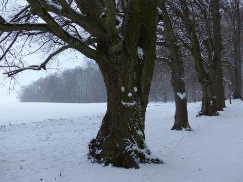medis,alėja,sniegas,veidas,miško gaiva,širdis,snieguotas,žiema,šaltas,laukas,toli,dangus,ruda,gentis,filialas,miškas,gamta,miško takas,miško pakraštis,takas,žygiai,randweg,miško krašto kelias,miško takas,žiemą,linda,lindenallee,miško pakraščio takas,panoramos takas,Höhenweg,ulmer höhenweg,eselsberg,ulm,Promenada