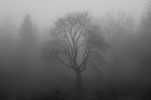 medis,rūkas,kiauras,pelkė,venn,filialas,struktūra,miškas,kraštovaizdis,nuotaika,Karg,retas,drėgnas,vanduo,lietus,uždanga,mistinis,gamtos rezervatas,niūrus,tamsa,baimė,juoda,balta,žiema,ruduo,depresija,gedulas