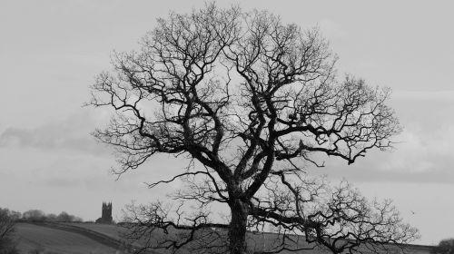 medis,tamsi,mįslingas