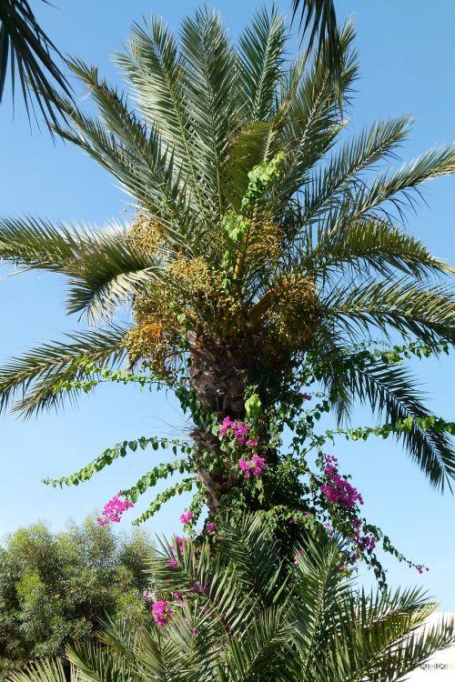 medis,atogrąžų,gamta,žalias,tropinė augmenija,gėlės,tropikai,flora,Tunisas,egzotiškas,augmenija