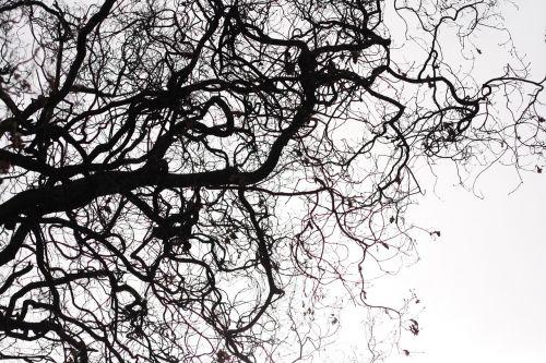 medis,gamta,kritimas,sezonas,siluetas,dangus,lauke,juoda ir balta,lapai