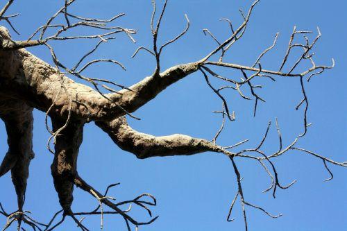 medis,rankos,pirštai,baobabas,butelio medis,beždžionių duona,medis aukštyn