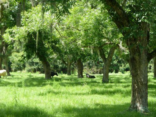 medis,ekologiškas,Žemdirbystė,lauke,aplinka,bagažinė,lapai,filialai,gamta,miškas,miškas,dykuma,miškai