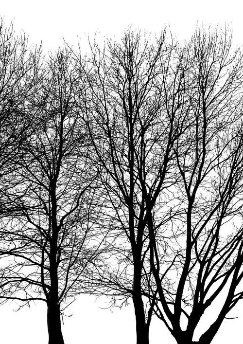medis,filialas,bagažinė,lapija,kontrastas,žiema,miškas,medžių šakos,šviesa ir šešėliai,giraitė