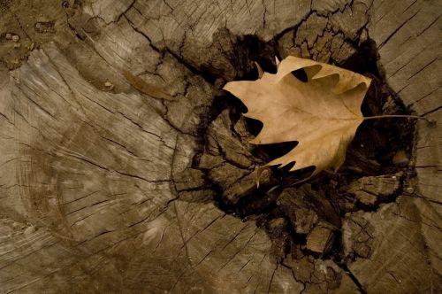 medis,yasmin,ruda,motyvas,modelis,dizainas,dekoruoti,tekstūra,išleisti rudą