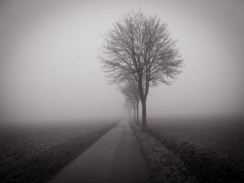 medis,laukas,rūkas,tamsi,niūrus,juostos,juoda ir balta,ariamasis