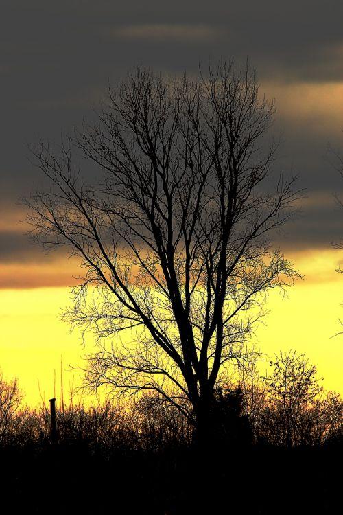 medis,dangus,gamta,geltona,ruduo,Kahl,debesys,kraštovaizdis,dengtas dangus