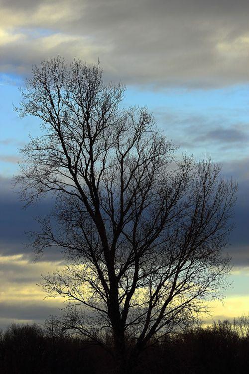 medis,dangus,mėlynas,gamta,ruduo,Kahl,debesys,kraštovaizdis,dengtas dangus