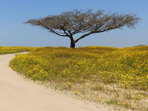 Medis, Dykuma, Negev
