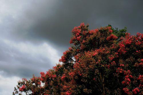 medis,gėlės,padengtas,žali lapai,dangus,debesys,niūrus,tamsi,šviesa prasiskverbia