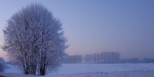 medis,žiema,sniegas,žiemos medis,plikas medis,saulėlydžio dangaus,žiemos scenos,žiemos peizažas