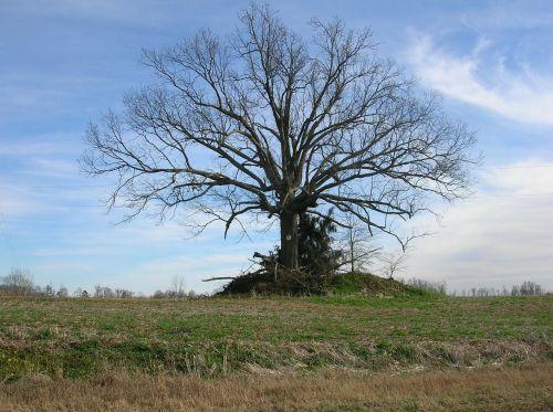 medis,kritimas,ruduo,žiema,kraštovaizdis,gamta,lauke,lauke,kaimas