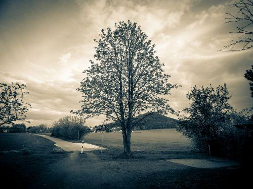 medis,dangus,kraštovaizdis,karūna,atmosferos dvasia,gamta,debesys,pavasaris,dengtas dangus