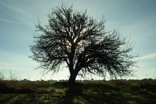 medis,siluetas,kraštovaizdis,šviesa,dangus,filialai,plikas,žiema,rytoj,bagažinė,aišku,baigia galioti,šaltas,sklypas,žemė,laukas