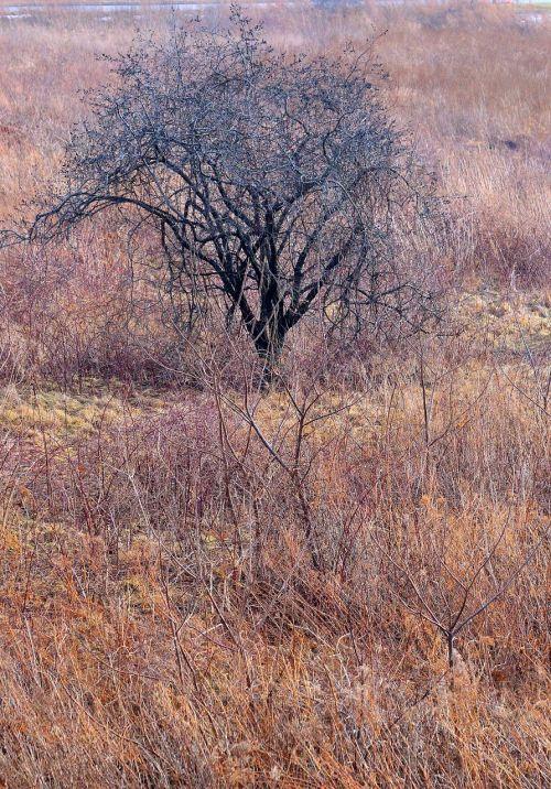 medis,žiema,desolate,gamta,kraštovaizdis,peizažas