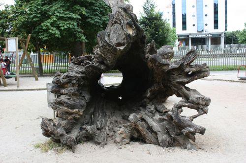 medis,bagažinė,mediena